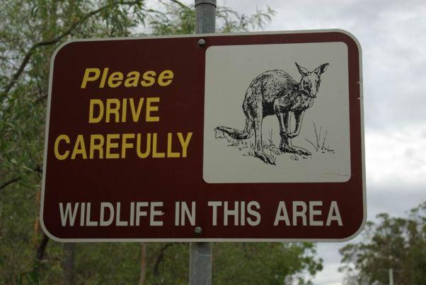 Wildlife Schild