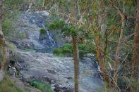 Cedar Creek Waterfalls