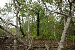 Wald mit Mangroven