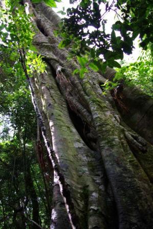 Baumwanderung