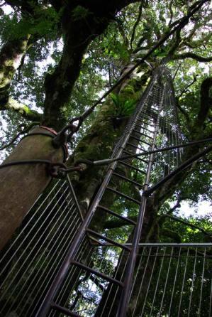 Baum Besteigung