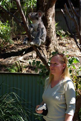 Anja 2 mit Koala