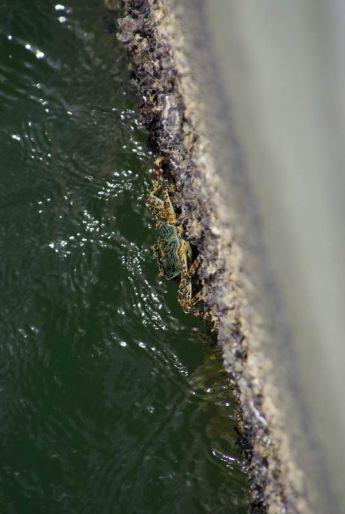 Krabbe am Hafen