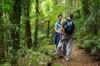 Zwei Typen im Regenwald