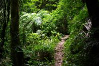 Wanderweg im Regenwald