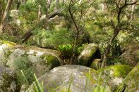 Im Bald Rock Nationalpark