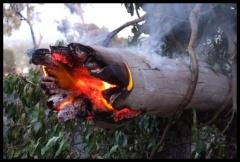 Buschfeuer