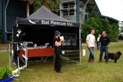 Bat Rescue Display