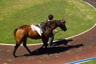 Pferdevorführung