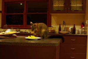 Timmy, das Possum
