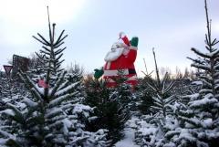 Weihnachtbaumeinkauf