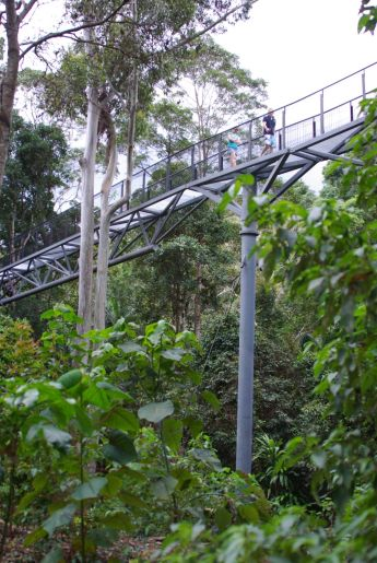 Skywalk Mount Tamborine