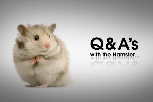 Hamster, Hamster
