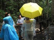 Im Regenwald braucht man einen Regenschirm