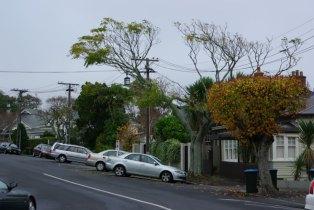Auckland im Winter