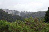 Der Regenwald raucht sogar