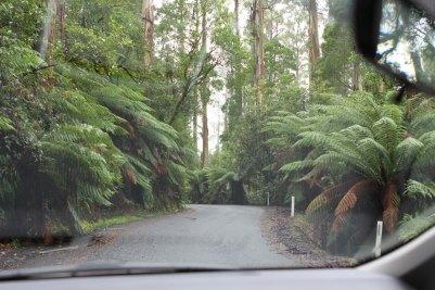 Durch den tiefsten Regenwald