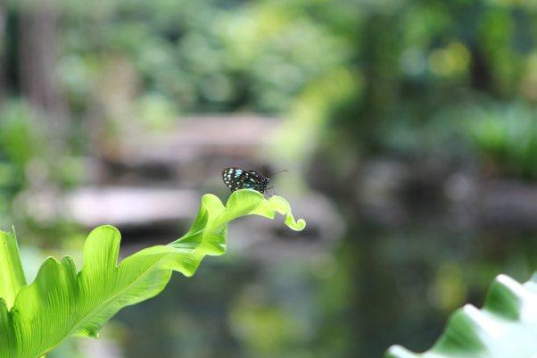 Schmetterling im Regenwald