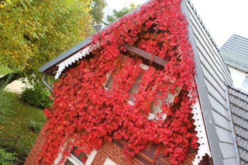 Herbst beim Nachbarn
