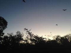Flyout Upper Coomera Kolonie
