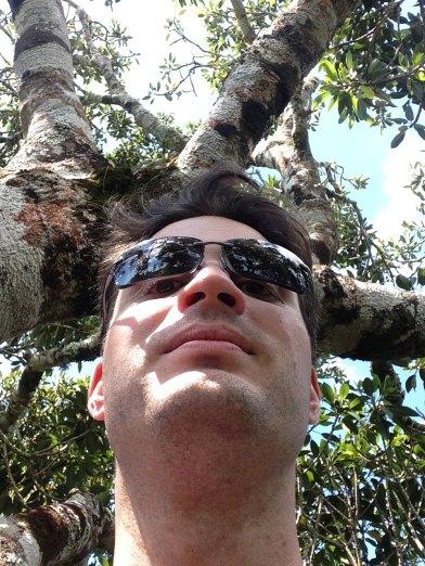 In den Bäumen O'Reilly's
