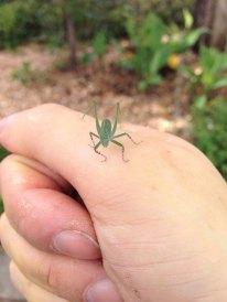 Hallo kleiner grüner Freund